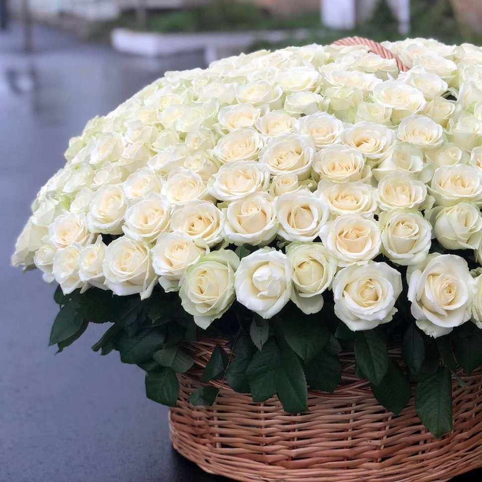 этом обычная картинку с большим букетом белых роз жилах этого