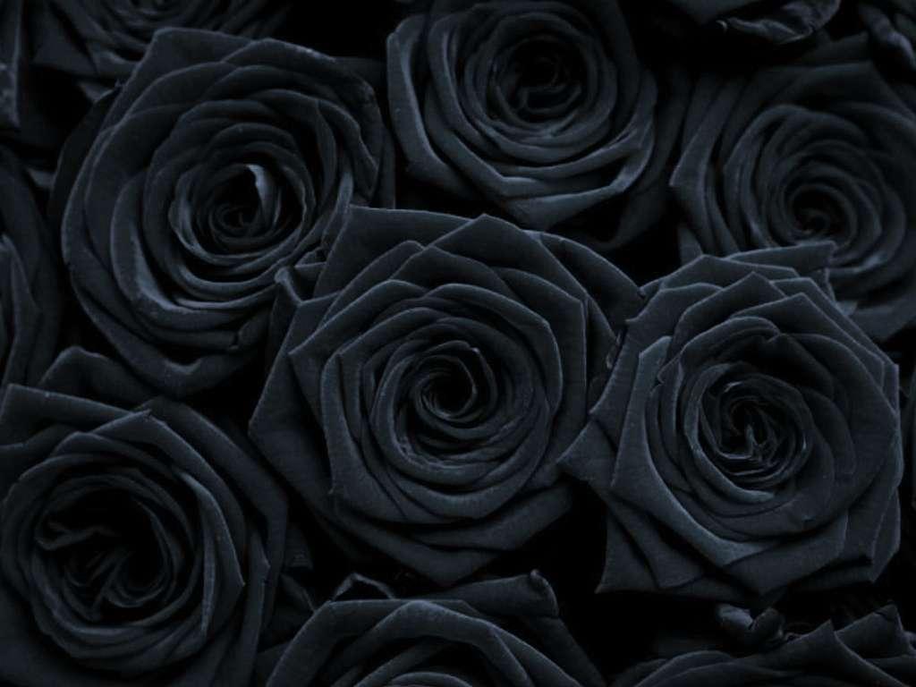 красивые фото фон черного цвета относится черной магии