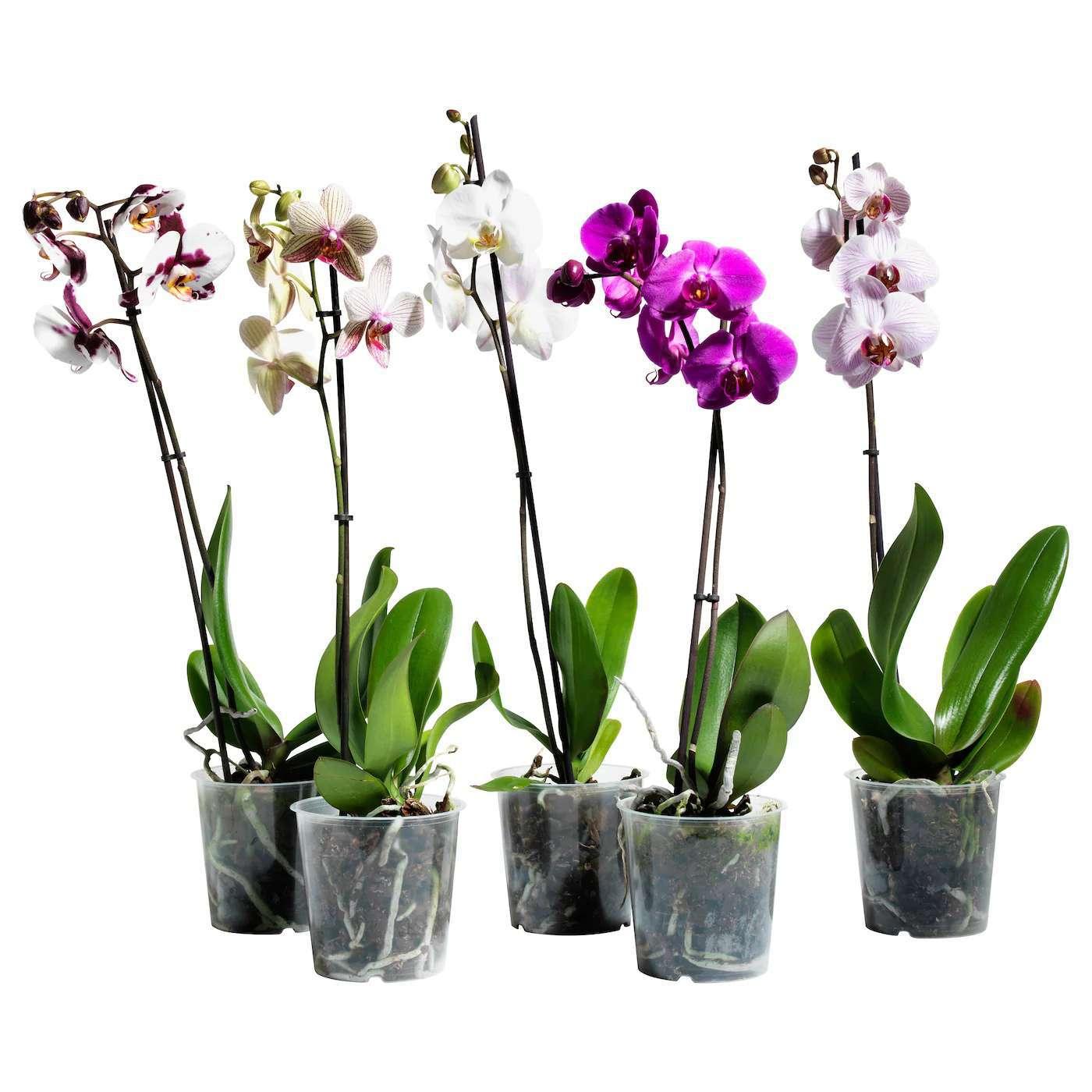 Интернет Магазин Орхидей В Беларуси