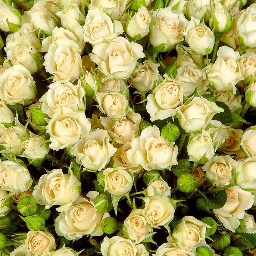 мелкие белые розы картинки